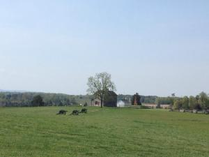 Manassas Battlefield Park and the Henry House